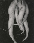 edward-weston-white-radishes