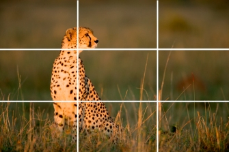 MOC Zuckerman on Composition Rule of Thirds 1-2 copy