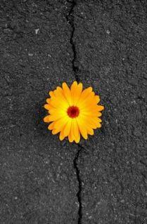 2f5106f41ce7fa77910f3105e08c4513--flower-colors-colorful-flowers